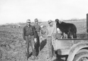 German POWs working on the farm of Jack Rathbun, near Nisland, stop to visit with dog, Jacky, in the back of a Model T Ford. The prisoner at left is holding a beet knife, used during harvesting.