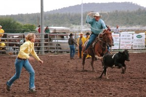 Family members pursue a calf in the team ribbon roping competition. The objective in this timed event is for the rider to lasso and restrain the animal, allowing the runner to remove the ribbon from its tail and run to a finish line.