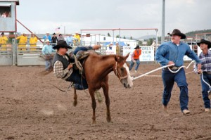 Cowboys attempt to restrain and mount a wild horse in the wild horse race.